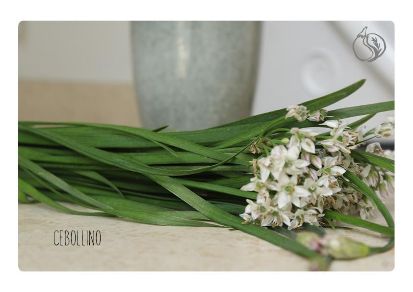 cebollino en flor